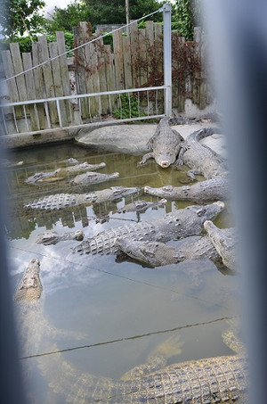 02crocodiles